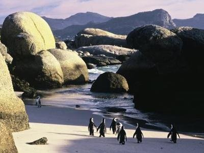 O'NEILL COLD WATER CLASSIC SERIE   SOUTH AFRICA