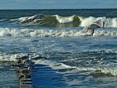 Sylt | Deutsche Nordsee | Surfen | ©Ernst Rose pixelio.de